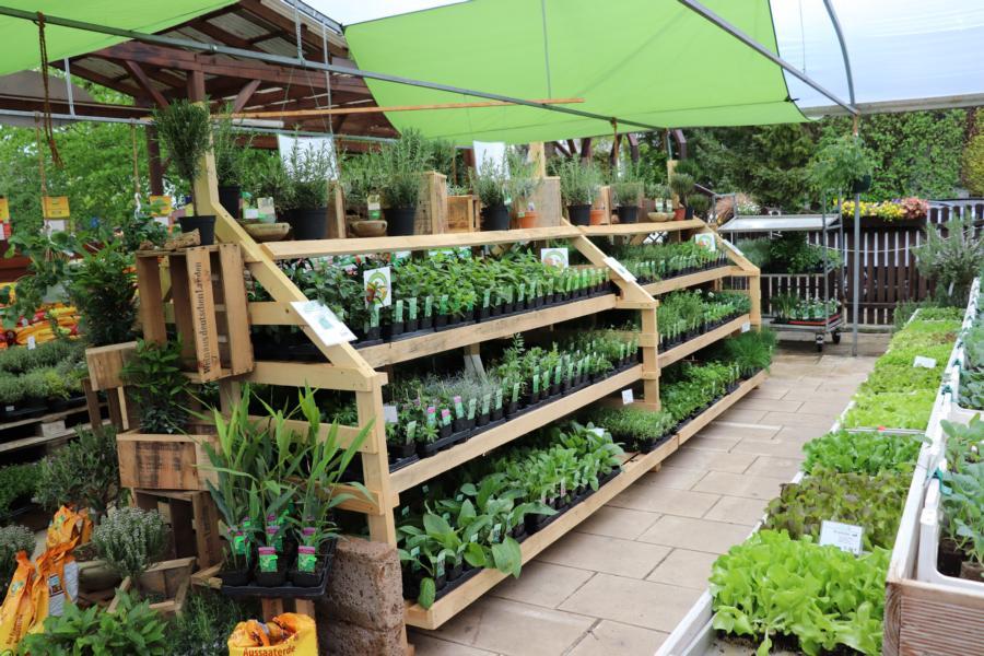 Gemüse, Kräuter und mehr